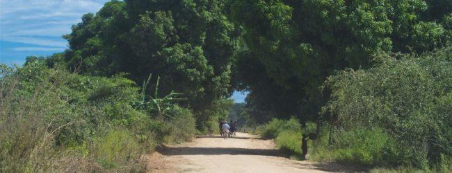 Habitat entlang der Straße zwischen Ambilobe und Sirama, 2013