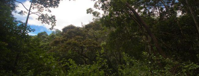 Habitat Montagne d'Ambre, 2013