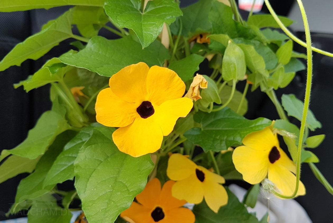 Plants For The Cage Madcham De