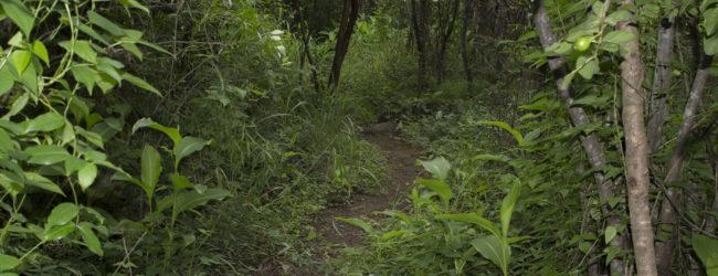 Habitat nahe Ambalavao, 2015