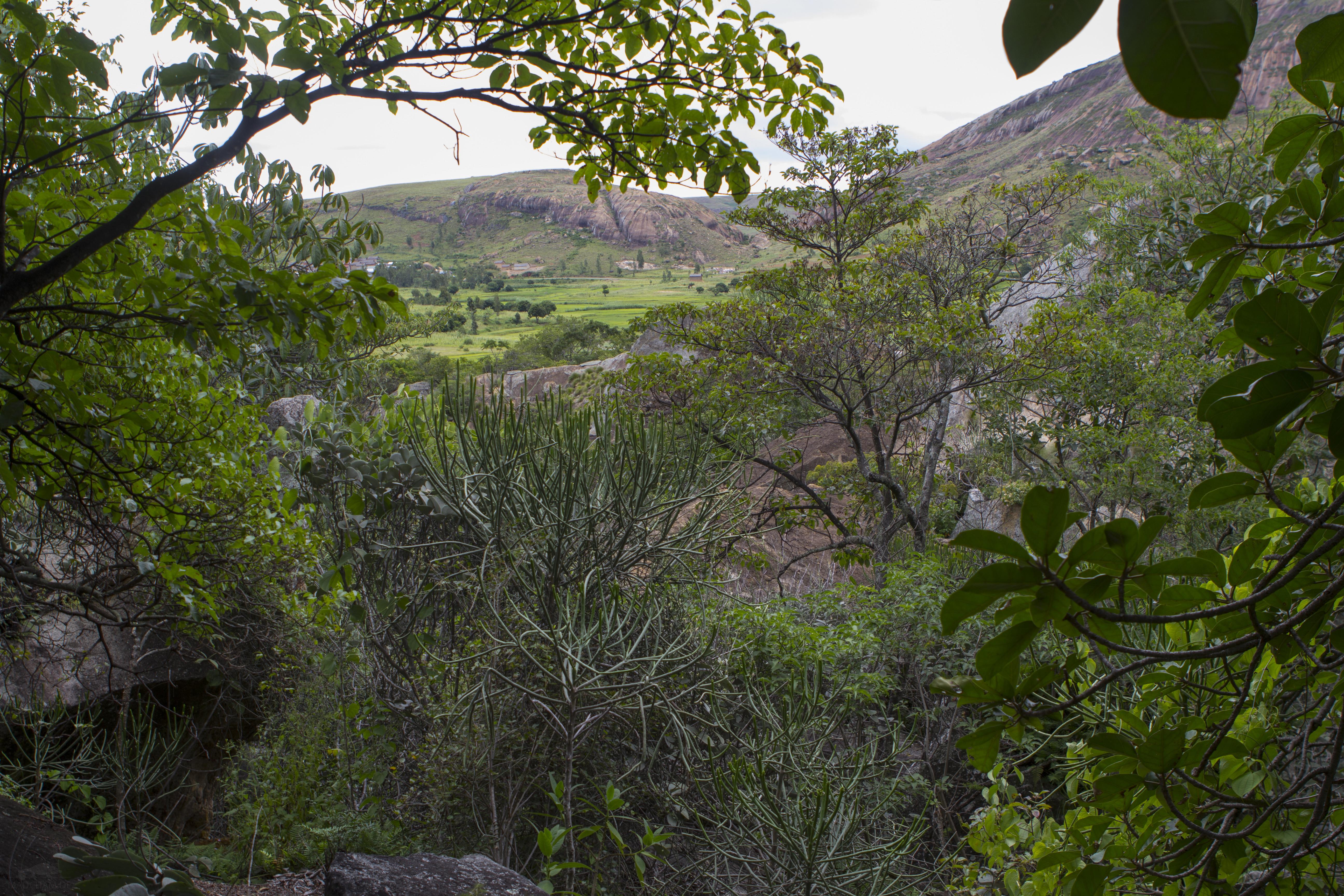Ambalavao Habitat Furcifer campani