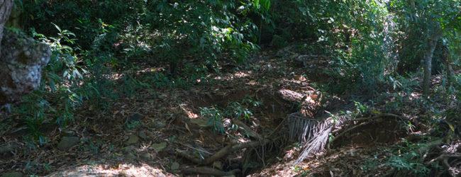 Brookesia stumpffi, Ankify, 2019 Habitat