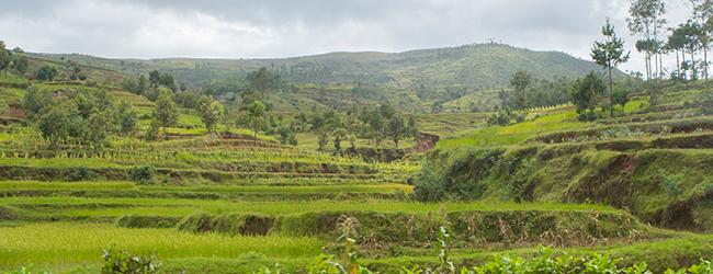 Furcifer lateralis Habitat Tana Antsirabe