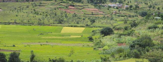 Furcifer lateralis Habitat vor Ambositra im zentralen Hochland