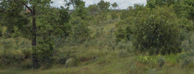 Furcifer lateralis Habitat vor Ambositra