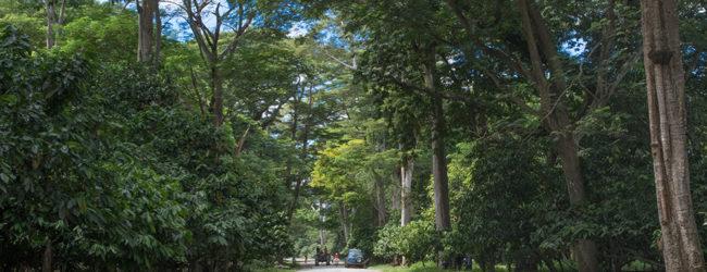 Furcifer pardalis Ambanja, Habitat, 2019