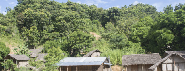 Furcifer pardalis Habitat Djangoa