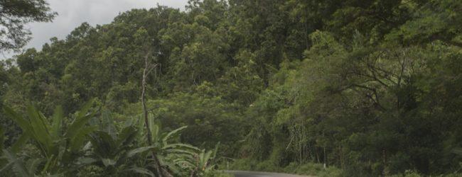 Furcifer pardalis Habitat zwischen Djojajely und Ampasibe