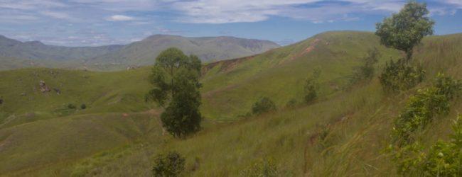 Furcifer viridis Habitat