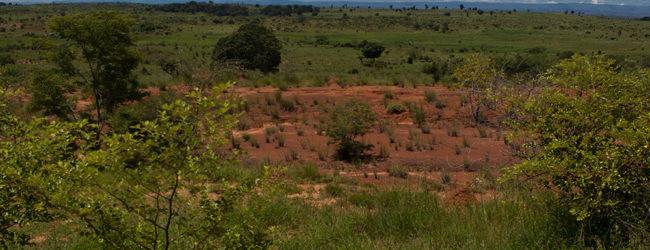 Furcifer viridis Habitat südlich von Ankaramibe 2019