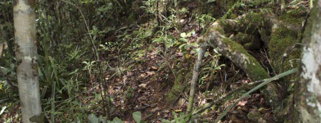 Habitat Andasibe