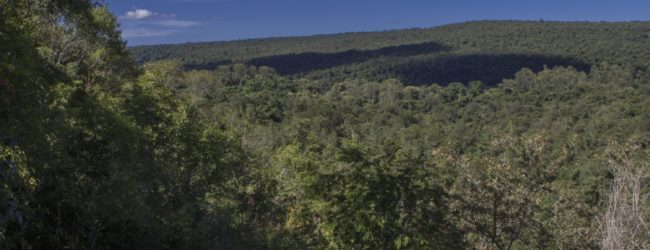 Habitat Ankarafantsika
