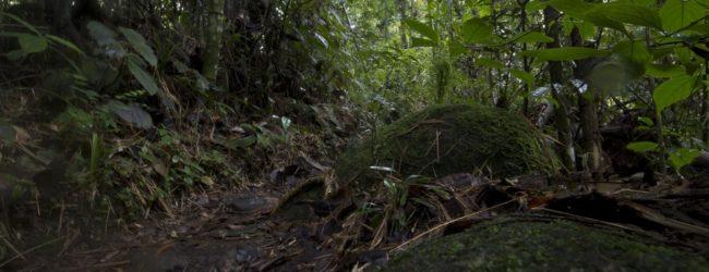 Habitat in Marojejy, 2014