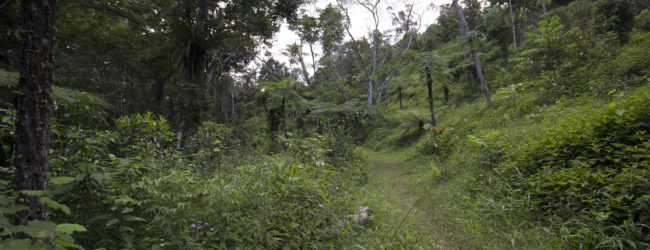 Habitat in Analamazaotra, 2014
