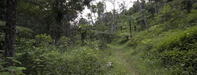 (Deutsch) Habitat in Analamazaotra, 2014