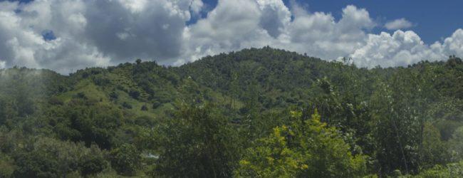 Habitat Fenoarivo