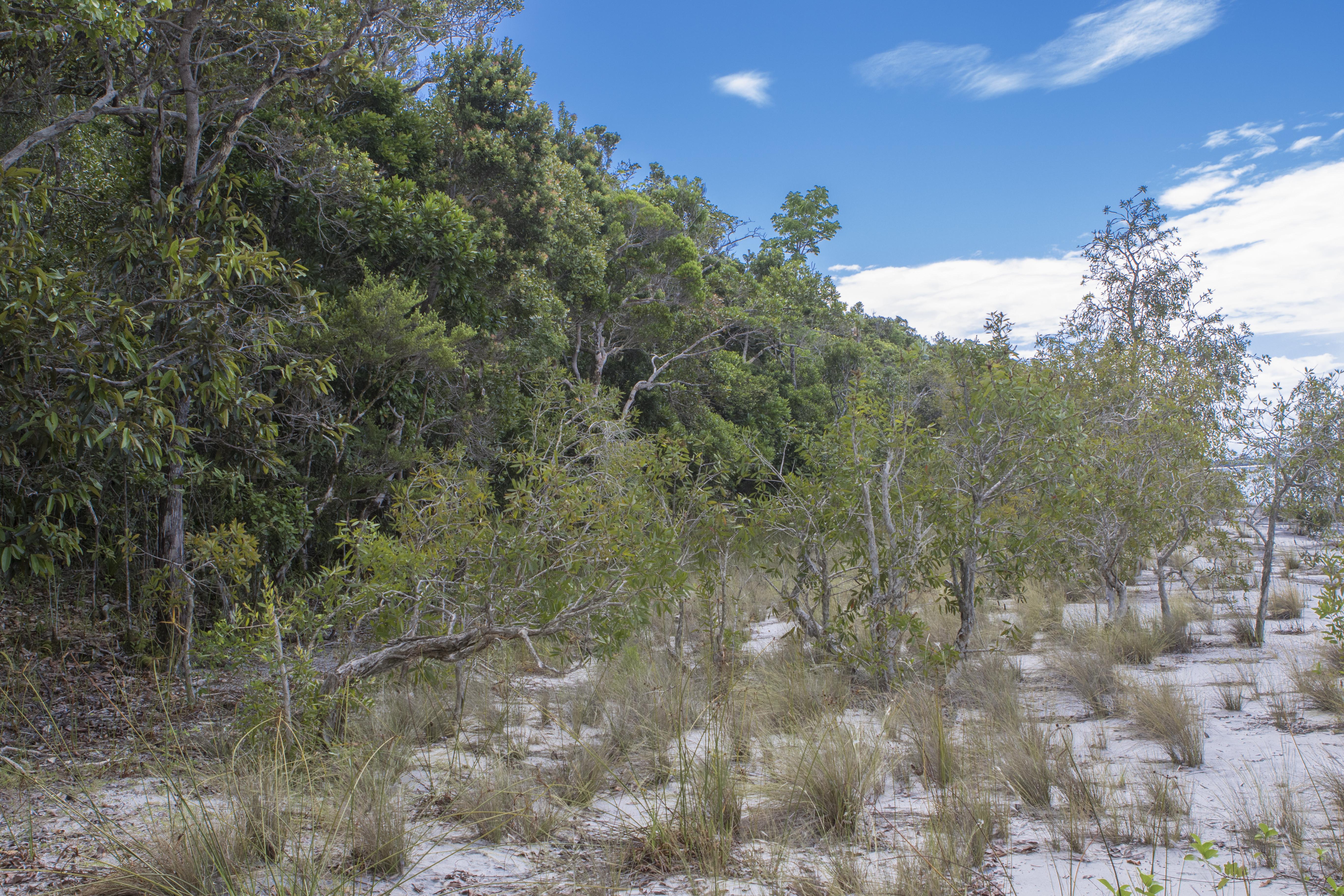 Habitat Lac Ampitabe