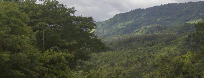 Habitat in Djanjoahely