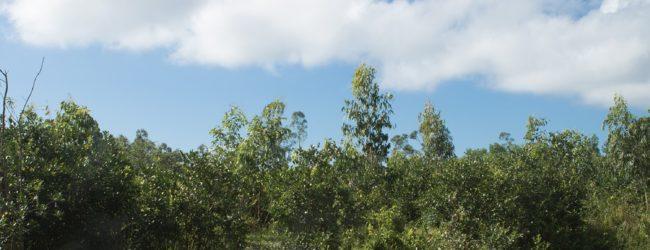 Habitat Furcifer pardalis Ostküste 2018