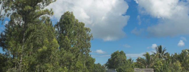 Habitat zwischen Mahambo und Mahavelona