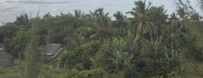 Habitat Mahavelona nördlich von Tomasina