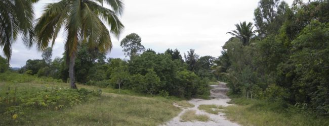 Habitat nahe Maroantsetra, 2014