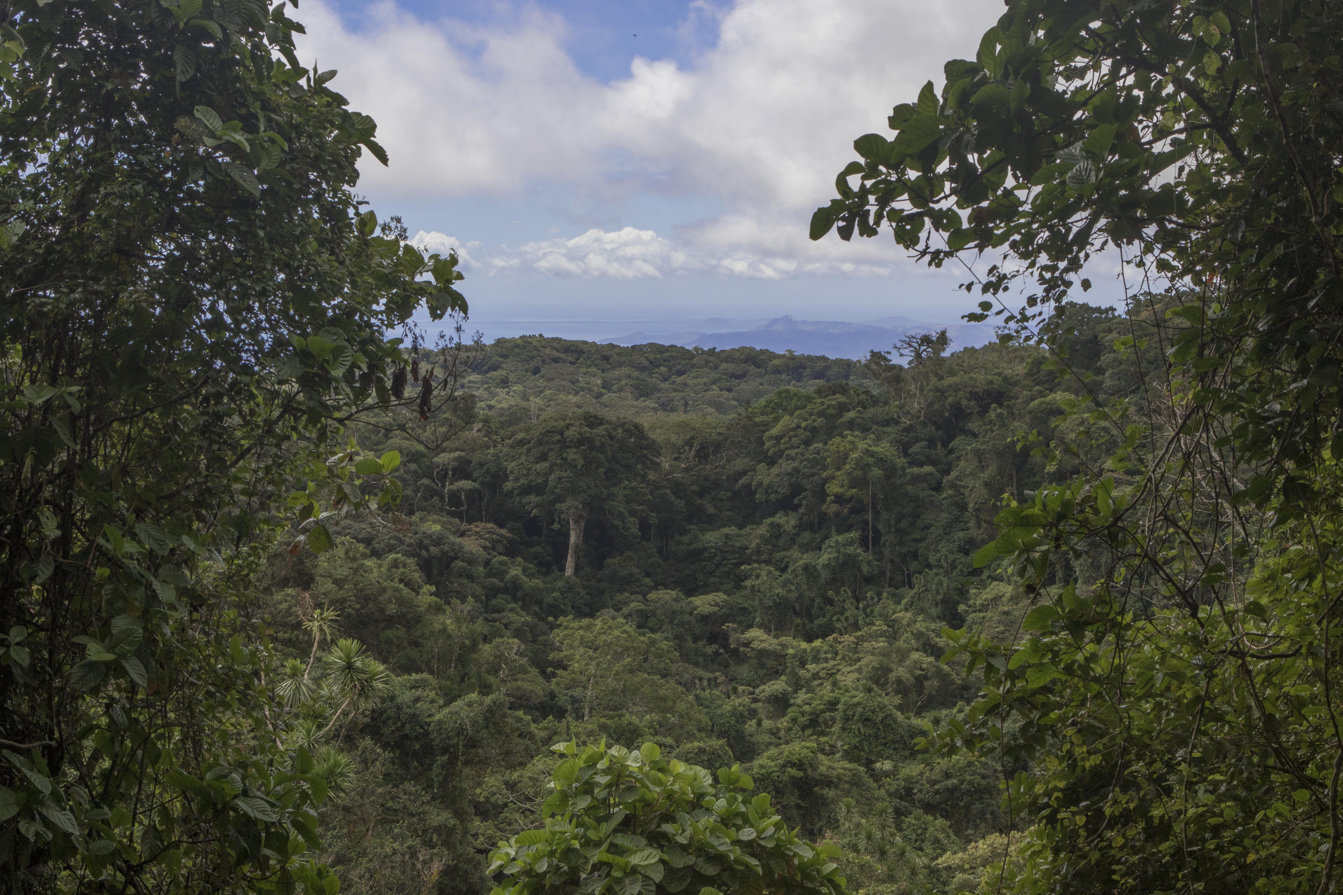 Habitat Montagne d'Ambre
