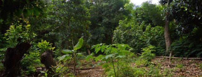 Habitat Nosy Faly 2013
