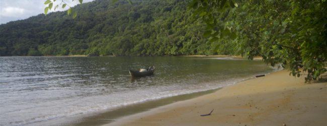 Habitat auf der Insel Nosy Mangabe, 2014