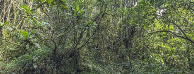 Habitat Ranomafana