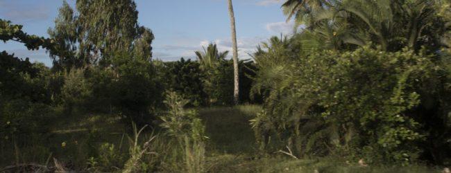 Habitat Tomasina Tamatave
