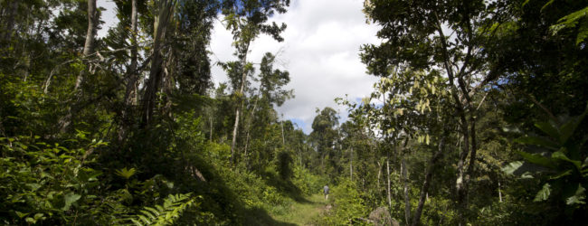 (Deutsch) Habitat in Analamazaotra, 2014