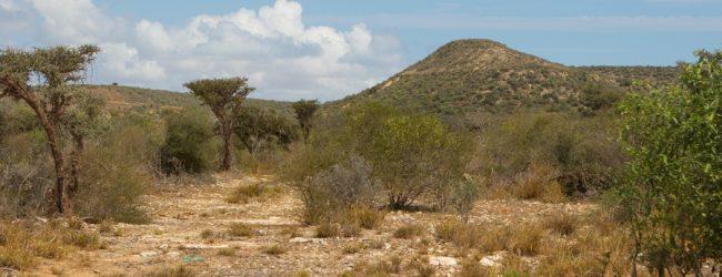 Habitat in Antsokay Furcifer verrucosus