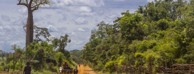 Habitat vor Kirindy 2017
