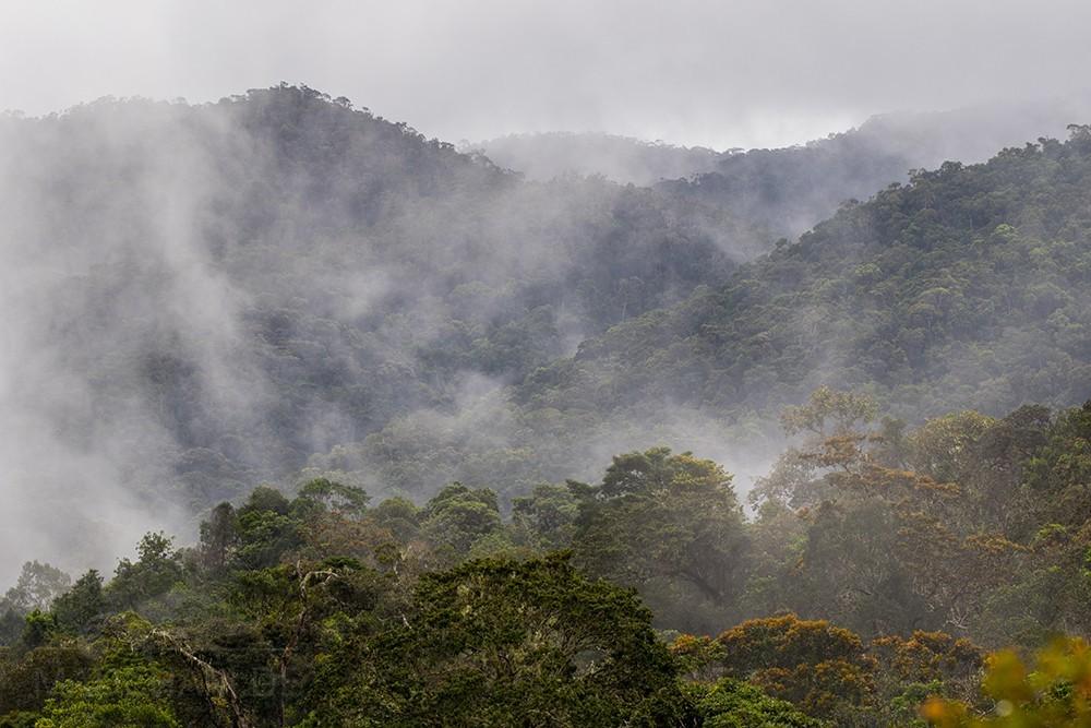 Nebel über Ranomafana