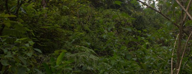 Vohimana Habitat 2018