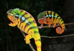 ...links sieht man jedoch ein Y am gleichen Tier (hier vorne im Bild)