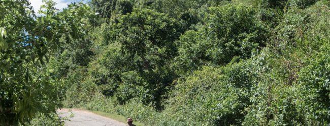 Habitat nahe Anjahambe