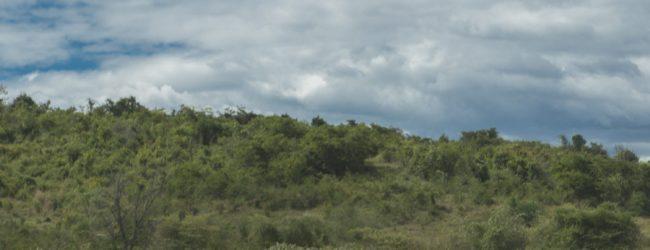 Furcifer angeli Habitat