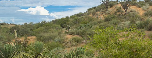 Habitat Belalanda Tulear