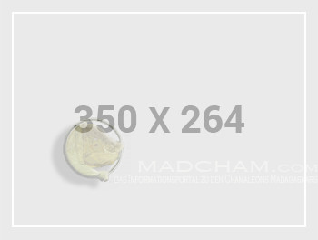 350x264-ph