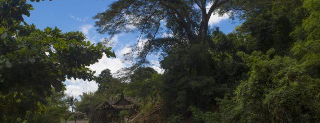 Habitat Ankify