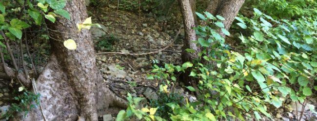 Brookesia micra Habitat