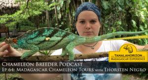 Chameleon Breeder Podacast Episode 64