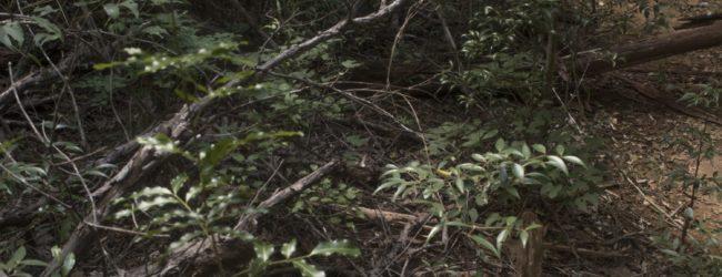 Kirindy Habitat Furcifer labordi