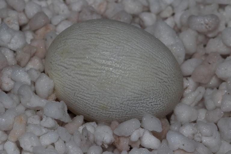 Eier Gelege Inkubation