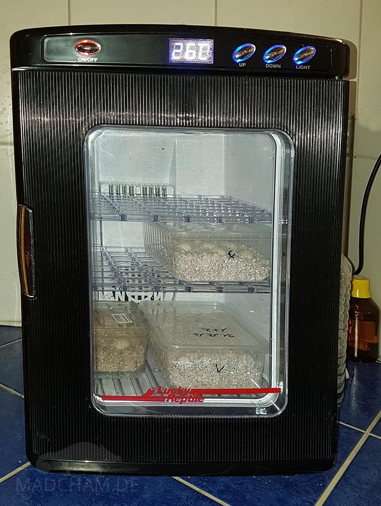 Inkubator Herp Nursery II