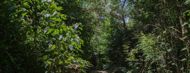 Furcifer pardalis Nosy Tanikely, Habitat, 2019