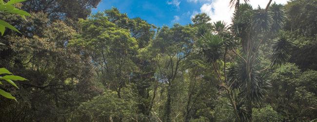 Habitat Montagne d'Ambre, 2019