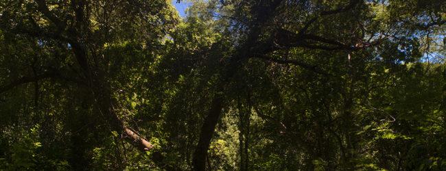 Nosy Hara Habitat